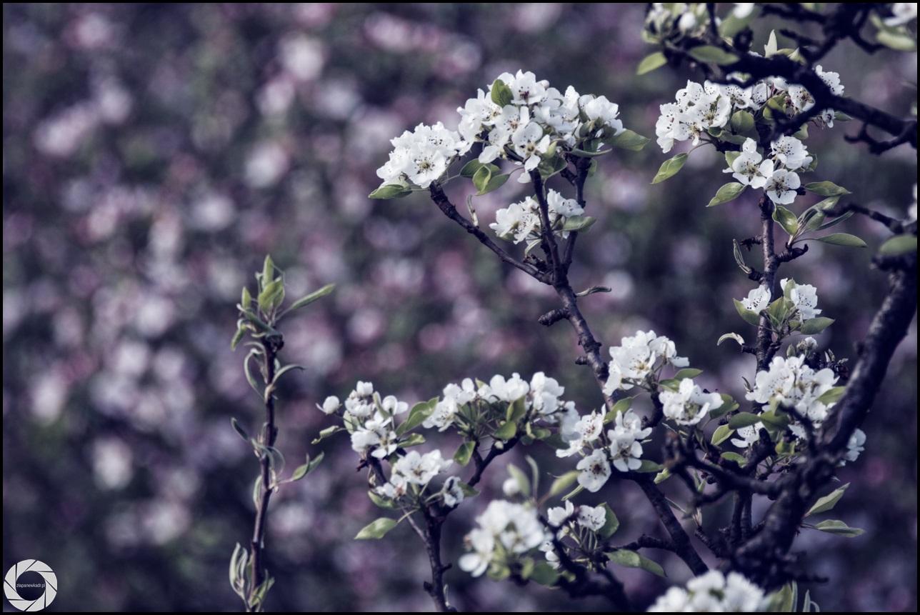 zlapanewkadr.pl_wiosna_09.jpg